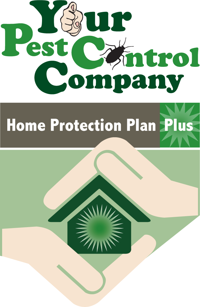 Your Pest Control Company